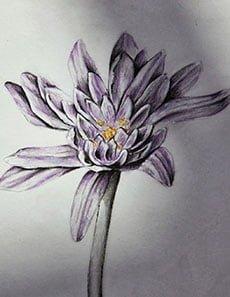 Tegning af blomst